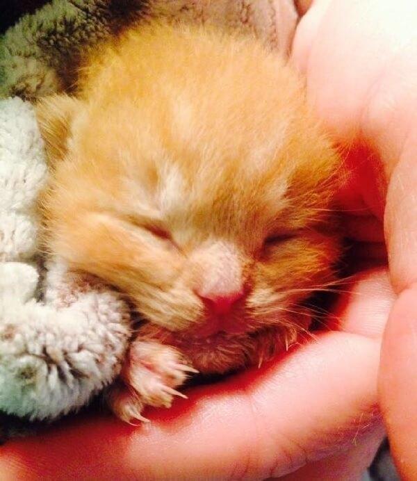火事で全勝した家の中から目も開いていない子猫が奇跡の生還。人々に助けられながら幸せへの道を歩きはじめた…