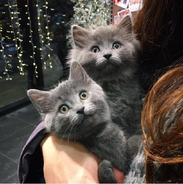 凍えそうなくらい寒い中、屋根裏から見つかった2匹の子猫。保護されてから片時も離れようとしない固い絆で結ばれていた…