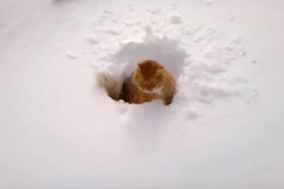 見渡す限りの銀世界。ふかふかの雪に思わず猫さんを投げてみたら予想通りの結末に…