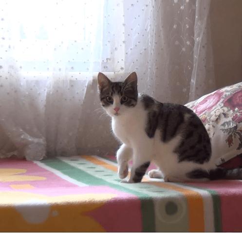 4か月前、近所の猫好きな老婦人に託したひとりぼっちの汚れた子猫を予防接種に連れて行った・・・