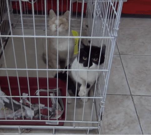 通りで見つけた盲目の猫が療養中に骨折!その1か月後、足に重傷を負った猫を友人が発見!2匹に永遠の家を見つけると誓った彼