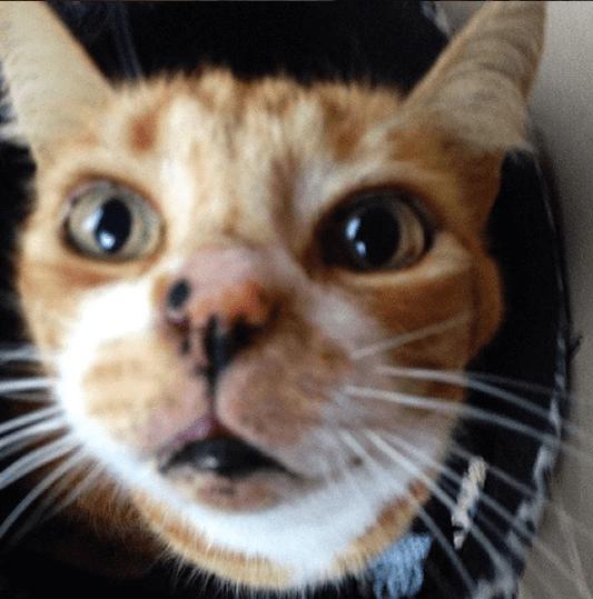 もう1匹猫を飼おうと出かけたシェルターは混雑していた。9歳の息子の膝に飛び乗ってきた4歳の猫