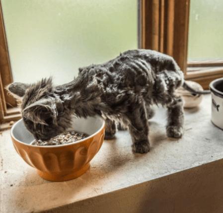 娘が猫を見に行きたいと言った翌日、草むらから頭を突き出したモジャモジャの子猫と出会った・・・