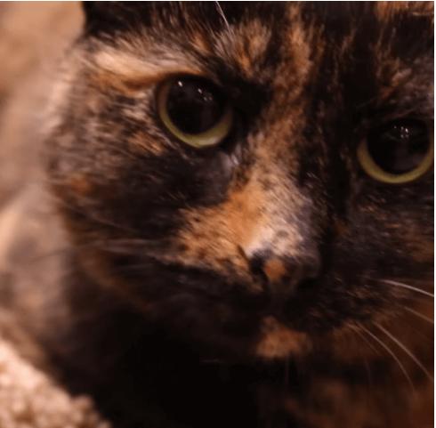 施設に保護されて7か月の間に2度戻されてしまった猫。その理由は『懐いてくれないから・・・』
