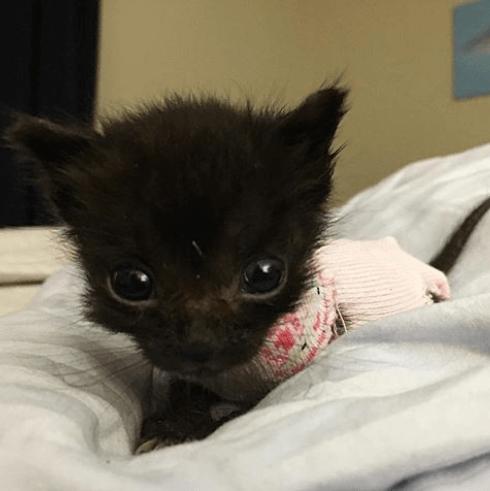 里親をしている姉妹が養育を引き受けた生後3週で僅か100g、新生児サイズのままだった小さな子猫の1週間。