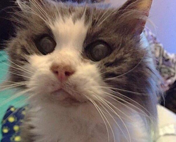 誰からもその存在すら認めてもらえず、保健所で殺処分されるのをただ待っているだけの19歳の老猫。心優しい夫婦と出会い幸せを手に入れた…