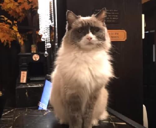 ぜひ泊まってみたい♡80年以上もの間、「支配人」として猫にフロントでおもてなしさせているホテル。近々10代目フロント猫がついに引退…