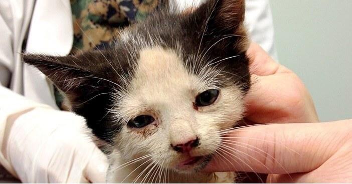 ゴミ捨て場からいきなり飛び出してきた子猫。保護して抱きあげると凄まじい悲鳴をあげた!よく見るととんでもないことになっていた…