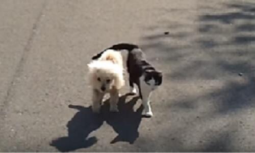 世界中が感動!目の見えない犬をサポートしながら一緒にお散歩する猫。とっても仲良しなふたりの前に大きな赤い車が立ちはだかる…