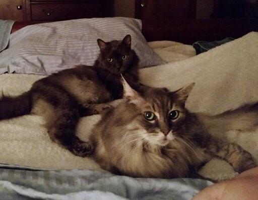「この子たちを大切にしてくれる人はいないだろうか」90歳という高齢のため猫の世話が辛くなったおじいさん。切なる望みを動物保護施設へ…