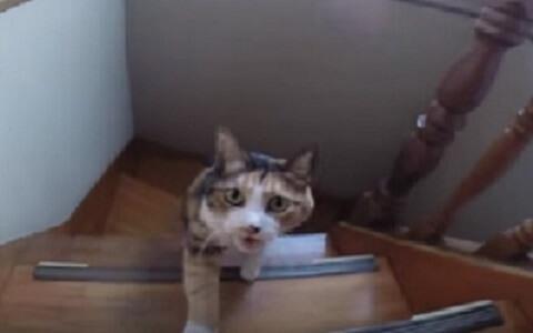 暑さ対策?!階段をどんどん滑り落ちていく猫さん。超美猫さんのアクロバティックな動きに驚きを隠せない!