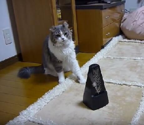 カチカチカチ…メトロノームがとっても気になる猫さん。音にビクつきながらもやっつけようとする様子に笑える!