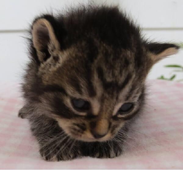 子猫のままで成長が止まった猫。優しい男性に心無い人たちから救い出され保護施設では人の心を癒やす存在になった…