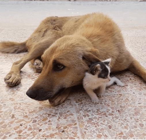 シリアの動物保護施設。死産で我が子を失いテディ・ベアを抱いていた母犬に笑顔を取り戻したひとりぼっちの子猫