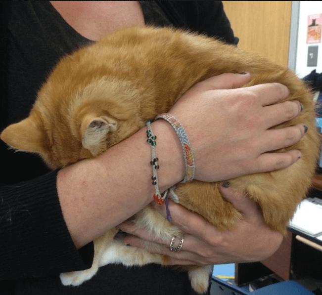 近所の子供が大事そうにバックパックに入れて保護施設へ連れてきた怯え切った野良猫