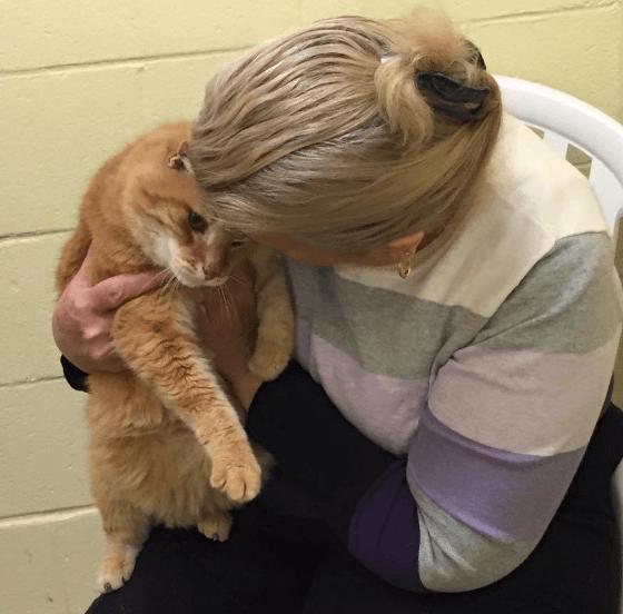 シェルターから迎えた11歳の猫がずっと元気がない・・・離ればなれになった16歳の親友と永遠の家族になった猫