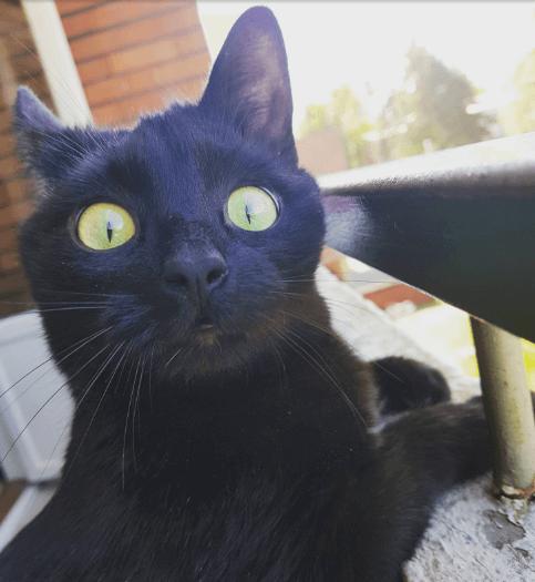 2018年5月のある日、4歳の黒猫が最上階の自宅でバルコニーデビュー!可愛すぎるリアクションが話題に
