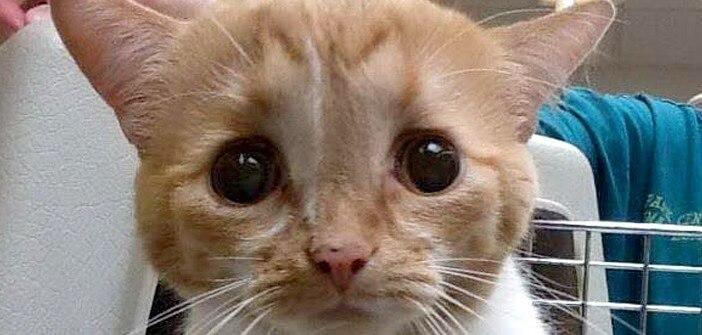 盲目で難病である脳の中に液体が蓄積する水頭症を抱えた子猫。人々にたっぷりの愛情を注がれて元気な姿に…