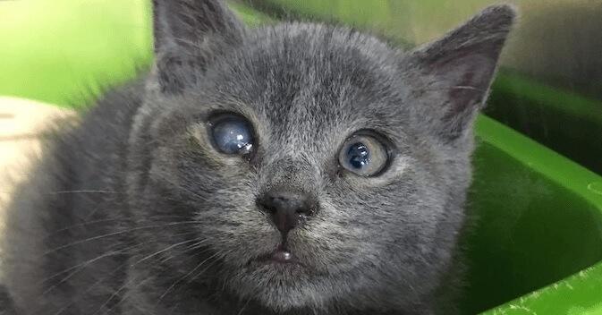 小屋の中でひとりぼっちでいた子猫。衰弱して片目は失明していた状態で発見され治療を受けると再び目に光が…
