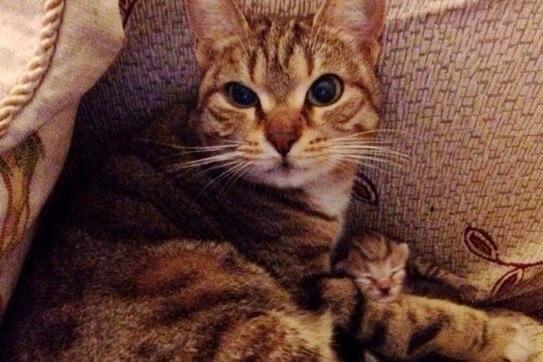突然、家のリビングに野良猫が入ってきて寝ていた!そのまま次の日を迎えると…驚く光景が!