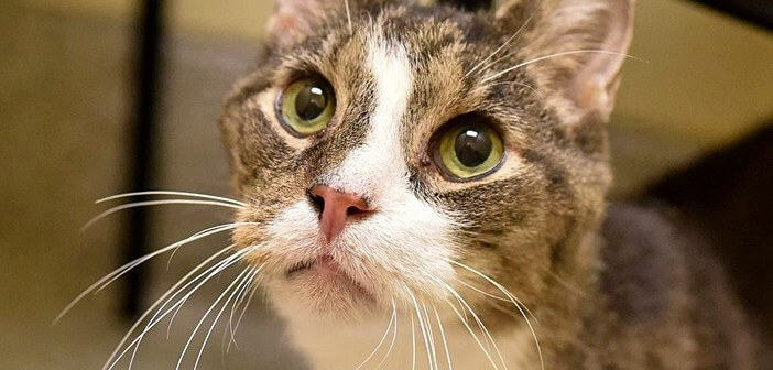飼い主が病気で飼えなくなり保護施設へやってきた 26歳の老猫。心優しい女性に出会うと幸せそうな表情を見せた…