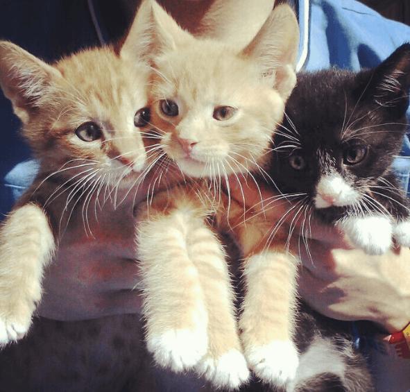 開業したての動物クリニックで猫を探していた獣医師と出会った民家の裏庭に置き去りになっていた子猫たち