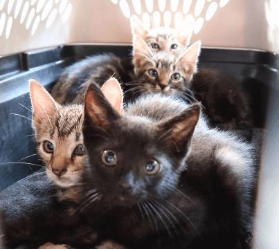 野良猫のお世話をしている人が木のくぼみに住んでいる4匹の子猫の兄弟が居ると知らせてくれた・・・