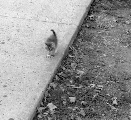 1年半前、スケボーをしていた私はトコトコ歩いて来る汚れた小さな子猫と出会った。そして今。