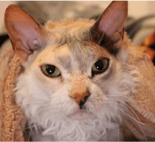 ずっと子猫を飼いたがっていたママは、私が気に入った子猫とは違うモジャモジャで薄汚れた子猫を選んだ