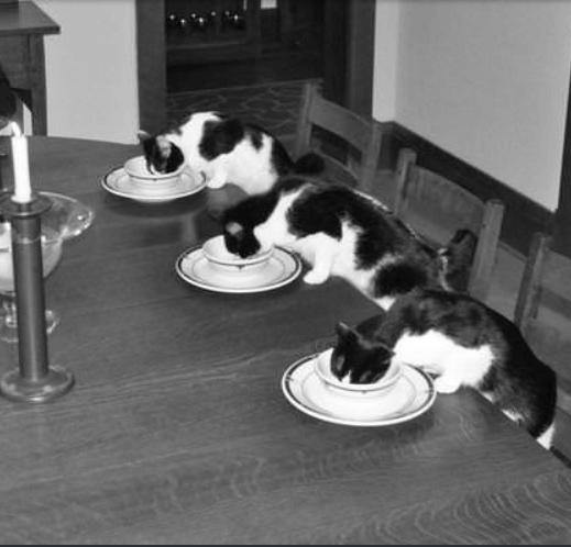 妻が6日間の旅行で街を出る。退屈な私は退屈な夕食を特別な時間にすることにした。私の猫と一緒に。