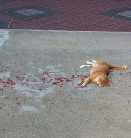 『散歩の途中、ただならぬ様子の猫が街角に横たわっていた・・・』発見者が掲示板で語る意外な結末とは?