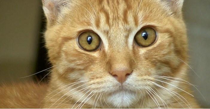 保護されて何故か食事をとらずにみるみる弱っていく猫。その予想外の原因に涙が止まらない…