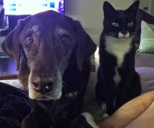 暮らし始めて13年間ずっとお互いを無視し続けてきた猫と犬。あることがきっかけとなり深い絆で結ばれる…