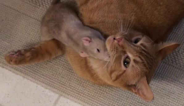 同じ屋根の下で暮らすことになった猫とねずみ。出会った瞬間に寄り添い誰もが驚くほど仲良くなりやがて無二の親友に!