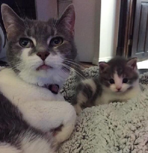 ひとりぼっちで彷徨うガリガリに痩せた子猫。保護すると自分とそっくりのおばあちゃん猫に出会い深い絆で結ばれた…