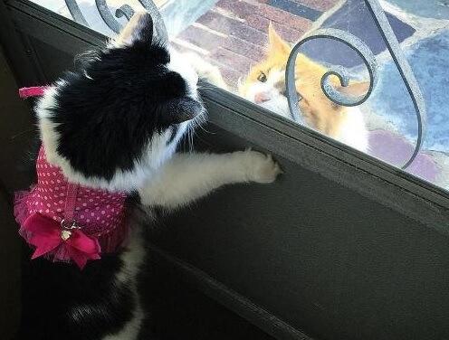 究極のラブストーリー…2年間アプローチし続けてついに美猫ちゃんのハートを射止めたイケメン猫さんが素敵♡