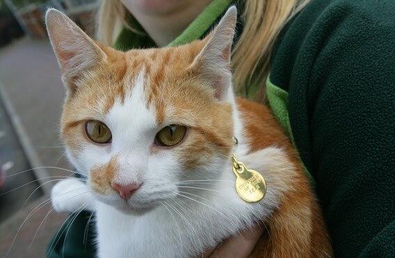 毎朝一番にペットショップやってくる野良猫さん。幸せそうにウインドショッピングを楽しむ姿にほっこり♡