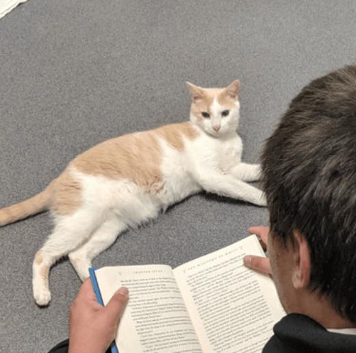 人間を恐れて食事もとらない盲目の野良猫。猫のために『ハリーポッター』の読み語りを続けたボランティアの少年