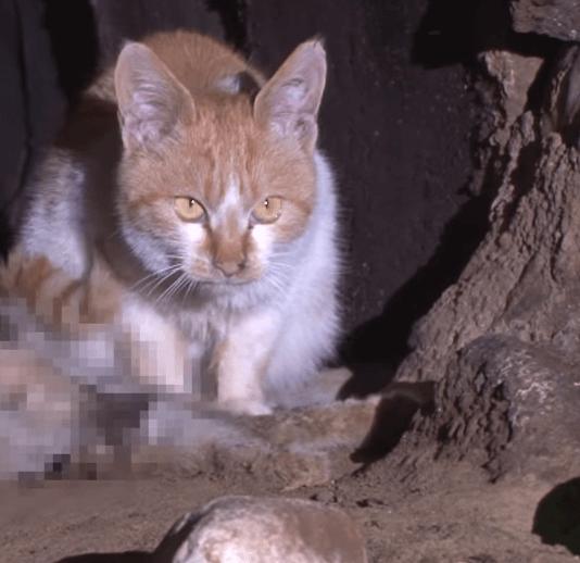 排水管の中で親友の亡骸の傍に寄り添い続ける猫。親友との別れを受け入れられない猫が一歩を踏み出した瞬間
