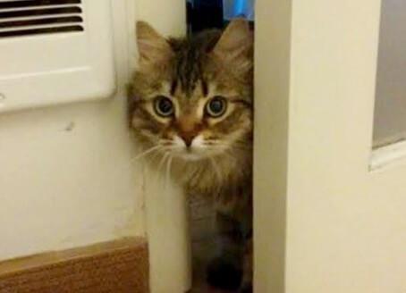 家族の一員に迎え、我が家に来てから物陰に隠れて全く出て来ない保護猫。1ヶ月が過ぎ、こっそり顔を出すと…