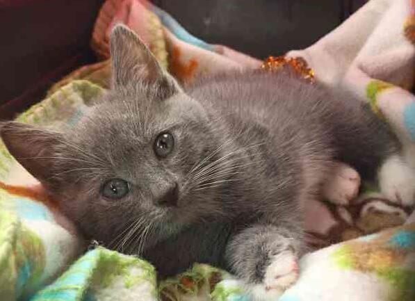 生まれつき左前足がなくさらにあるはずのものがないという過酷な運命を背負っている子猫。それでも強く生きる姿に涙…