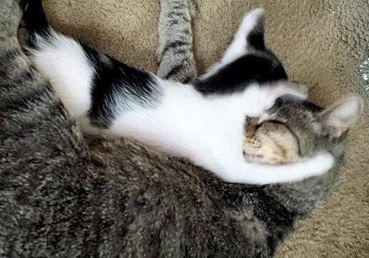 え?!愛猫が子猫を連れて散歩から帰ってきた!そのまま家族に迎えるととっても仲良し親子に♡