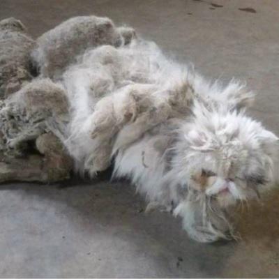 驚愕!愛妻に先立たれ自らも病に倒れ生活できなくなった高齢者の愛猫。発見されたときの無残な姿に周囲が愕然…