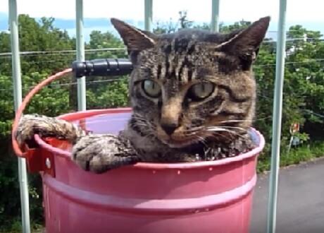 「いい湯だな~♪」露天風呂が大好きになった半野良猫。男性の「お風呂だよ~!」の声かけで嬉しそうにやって来る姿にほっこり♡