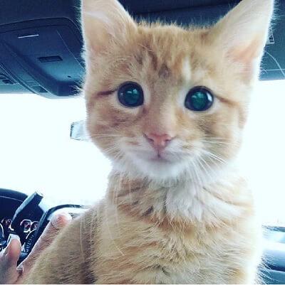早朝、オフィスのゴミ捨て場で独り鳴いていた子猫。保護され安心するととっても幸せそうな姿をみせてくれた…