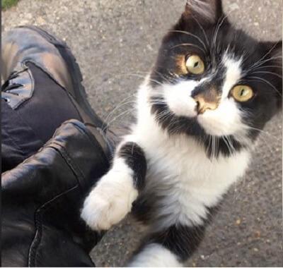 バス停で暮らす人気者の猫さん。バスを待っているすべての人に挨拶し、待ち時間を楽しいひとときに変えてくれる♪