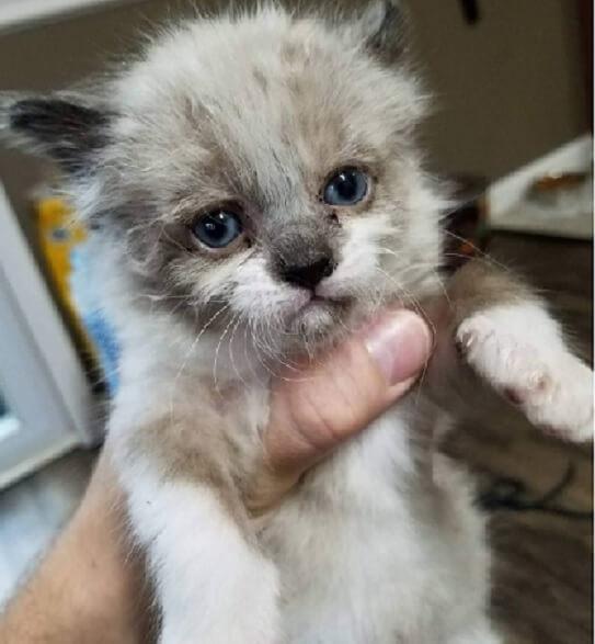 フェンスの外でへその緒がついたままで鳴いていた子猫。心優しい男性に発見され素敵な家族と出会うことに♡