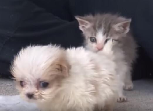 悪質なパピーミルから救出されたシーズーの子犬と生後2日で捨てられた子猫の深い絆に涙…