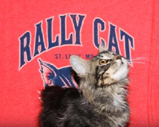 えっ?!放送事故!アメリカ大リーグ試合中に突然乱入した子猫。とんだハプニングに観客も選手もスタッフも大騒ぎした結果…