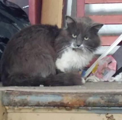 『猫は放っておいてください。猫にはここに居る理由があります。』一軒家に放置された猫の傍に貼られた1枚のメモ
